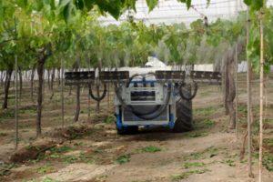 Pulverizadores de uva de mesa